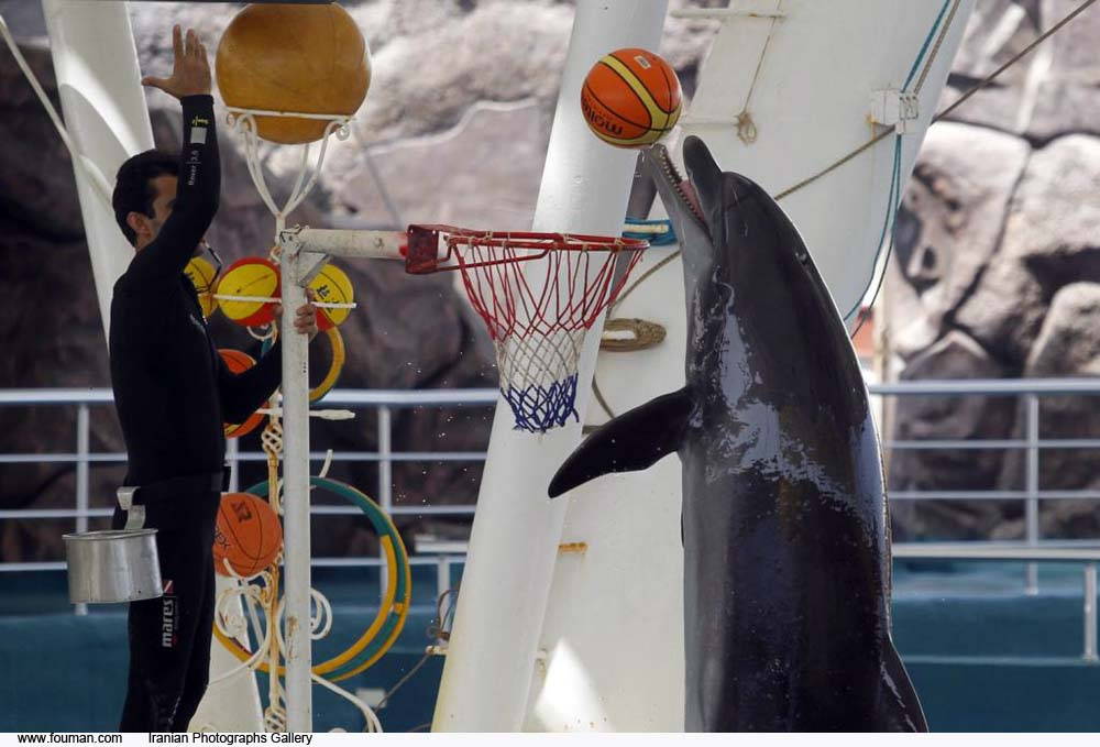 Persian_Gulf_Kish_Island_Dolphin.jpg