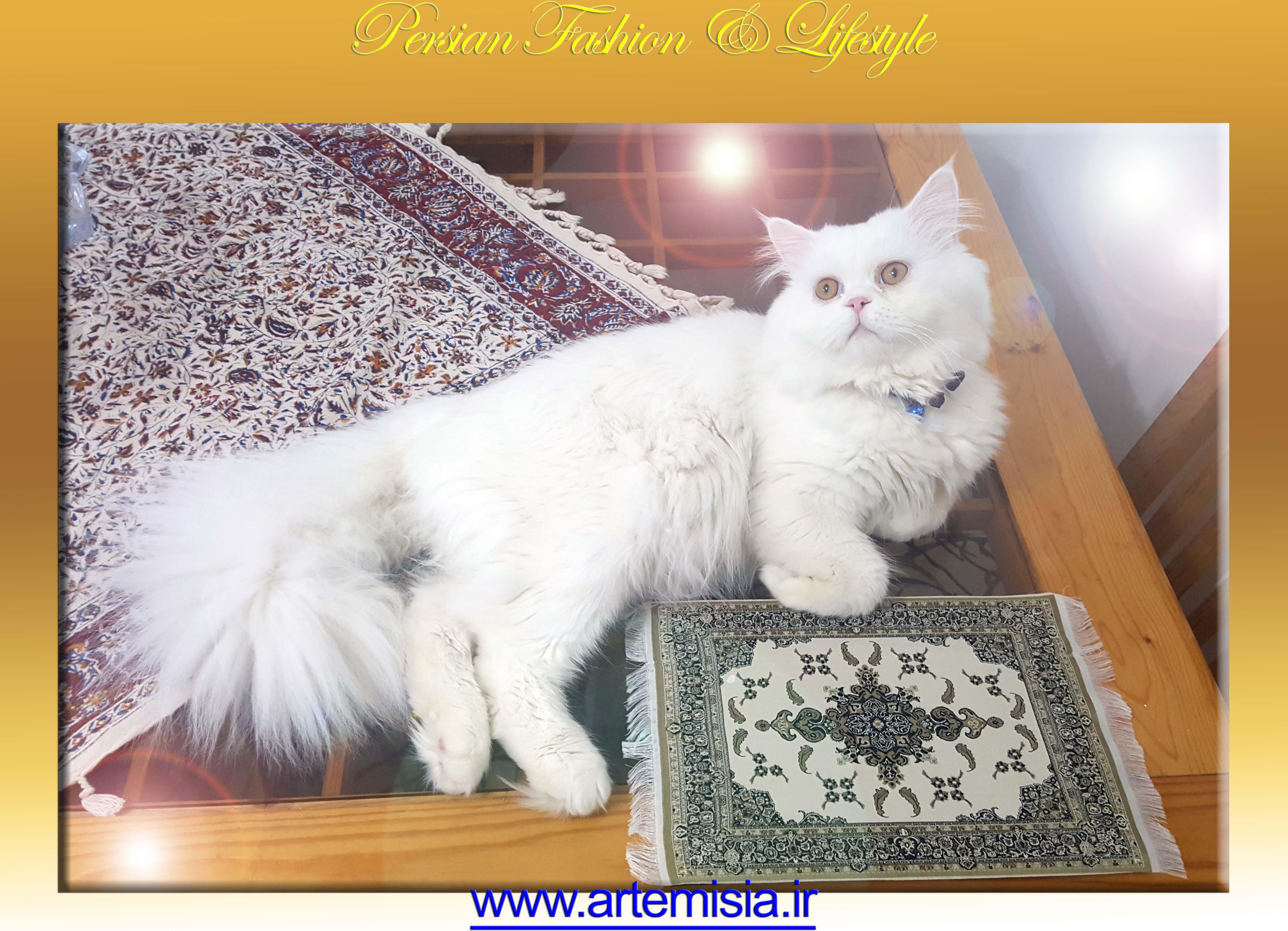 Carpet Mouse Pad Mojgan Design
