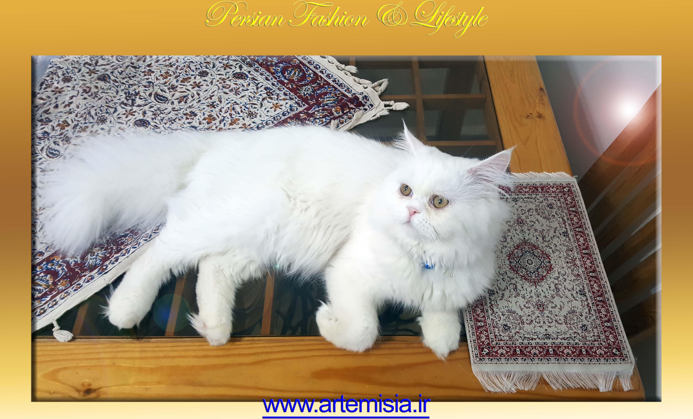 Shayan Carpet Mouse Pad